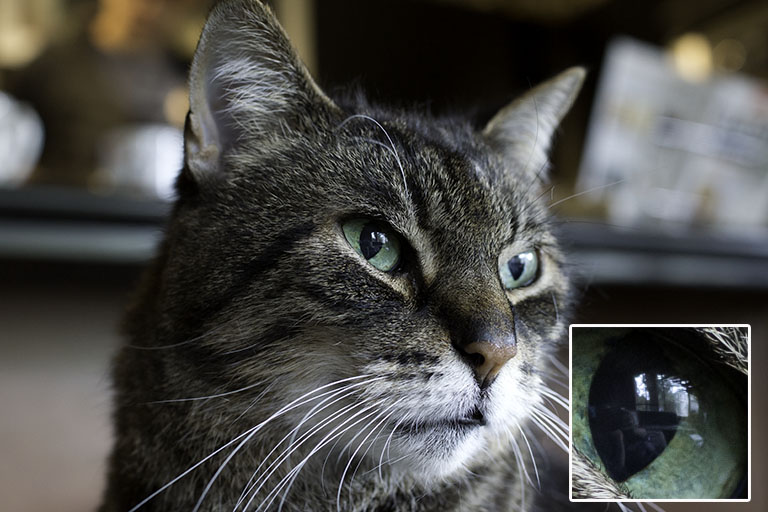 That's a clear reflection of me and the window in my cat Buddy's eye. Taken with Sony a58 and Sony 35mm lens.